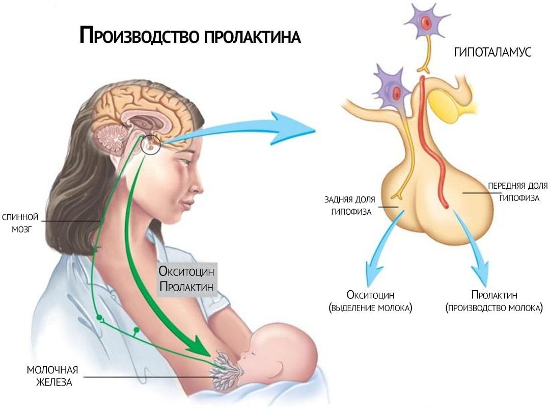 У беременной повышен пролактин 11