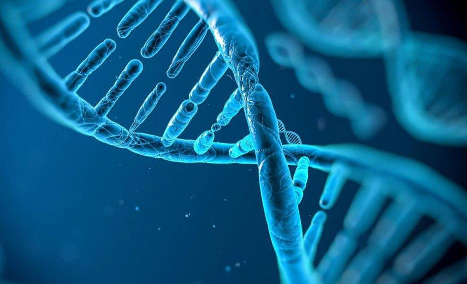 Гены человека. Источник: http://www.sciencemag.org