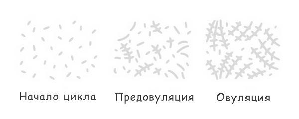 Кристаллизация слюны
