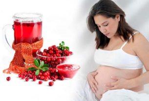 Клюква при беременности