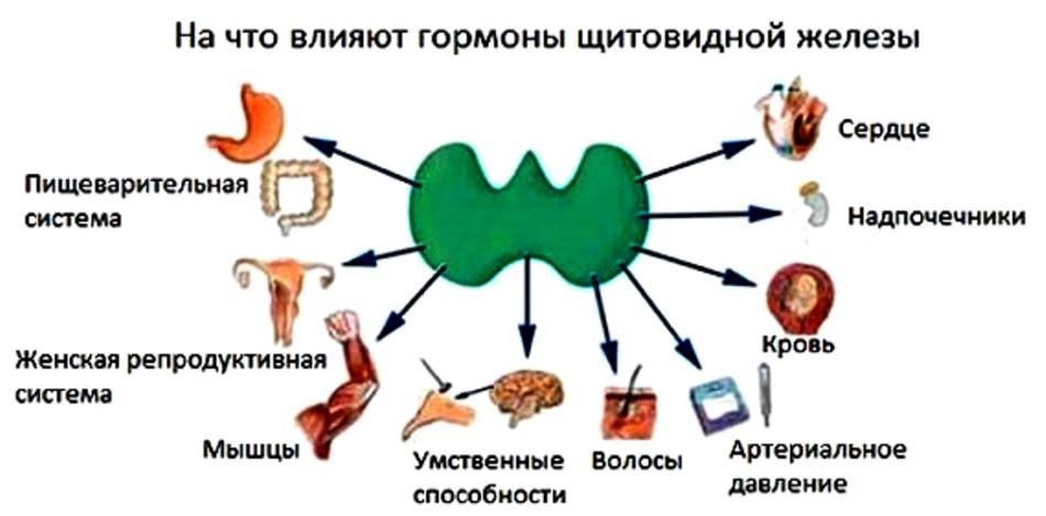 Гормона щитовидной железы