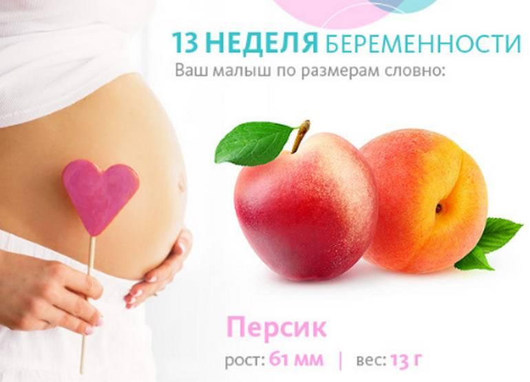 Размер плода