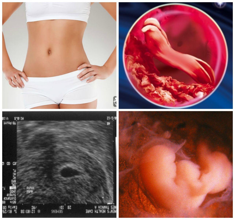 Картинки беременности от начала до конца