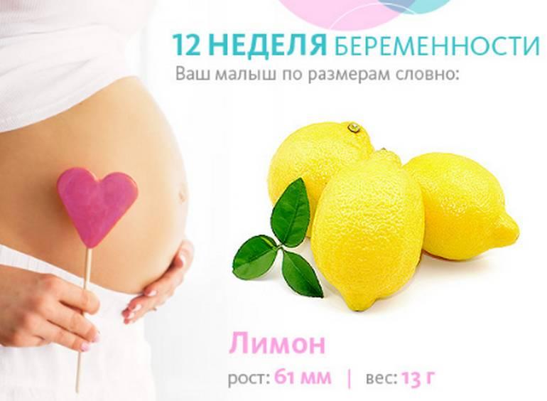 Размер плода на 12