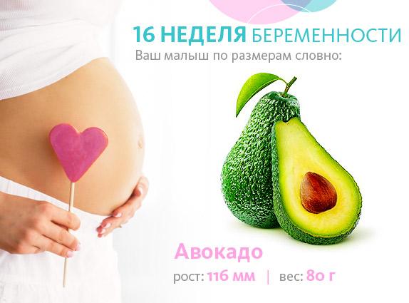 Размер плода в 16 недель