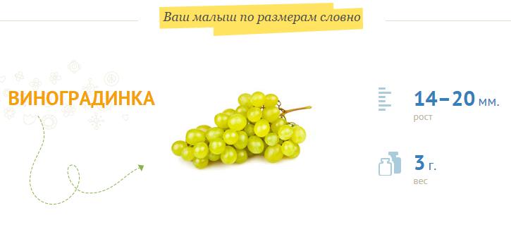 Виноградинка на 8 неделе