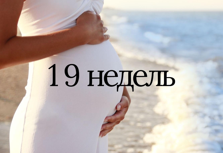 19 недель