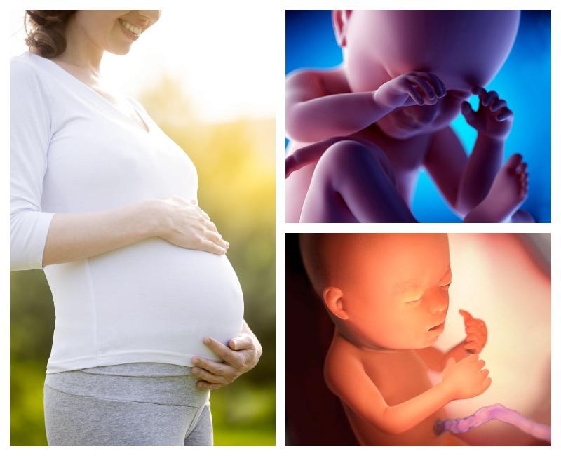 23 недели малышу