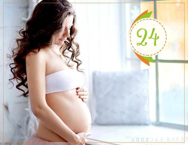24 неделя беременности
