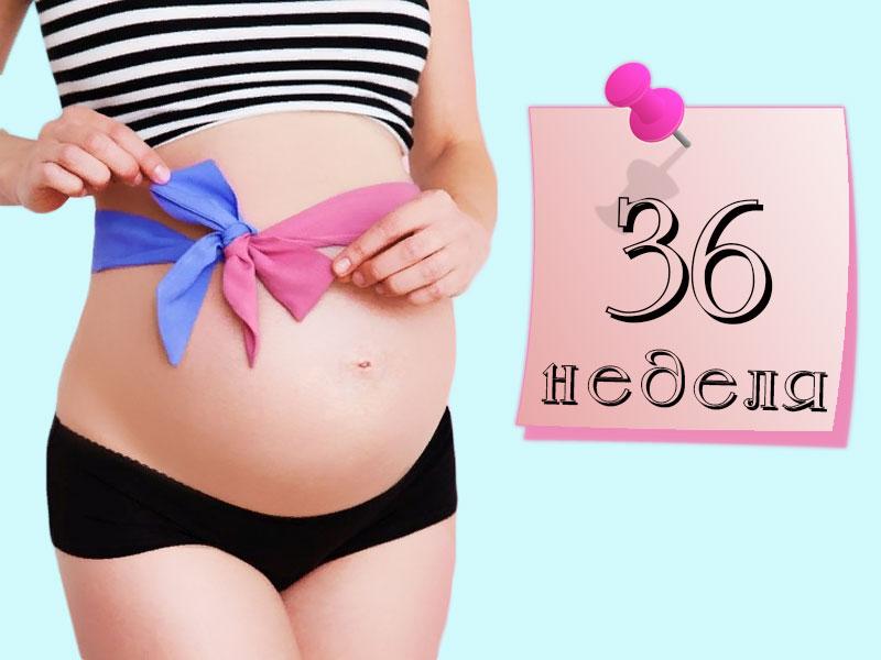 36 недель беременности