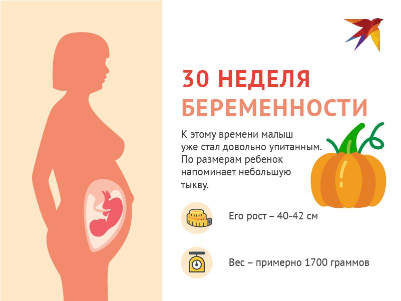 30 недель размер