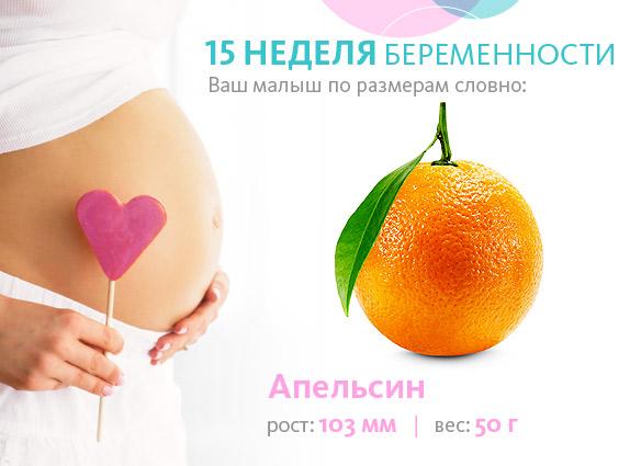 Размер плода на 15 неделе