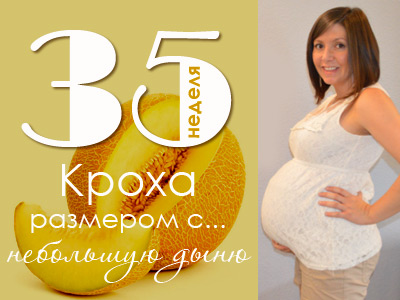 Размер ребенка в 35 недель